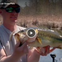 Tips for Fluke Fishing Bass on Grass Flats